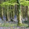 Whatcombe Woods