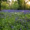 Milborne Woods